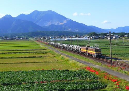 ■貨物列車と藤原岳_薄め.jpg
