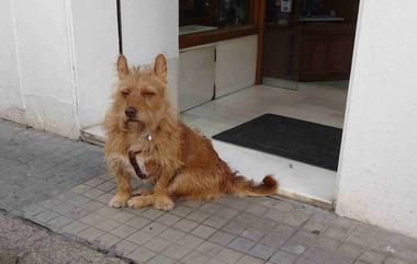 □スペインの犬.jpg