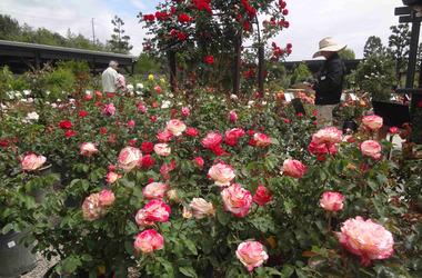 □薔薇園.jpg