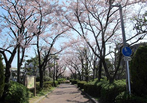 ◎桜_3.jpg
