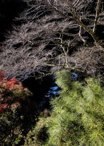 ◎樹と水と.jpg