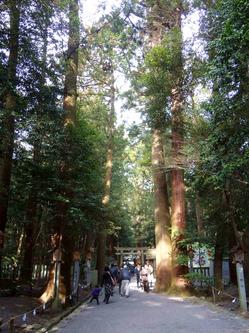 〇杉の参道.jpg