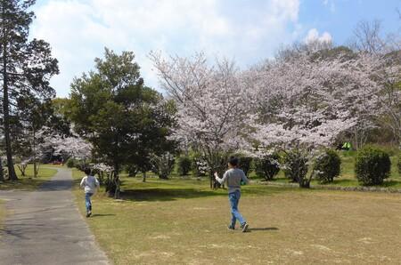 〇桜4.jpg
