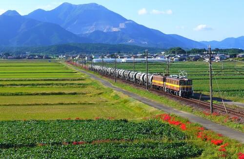 〇62女郎花と貨物列車.jpg