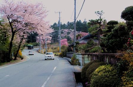 桜_2.jpg