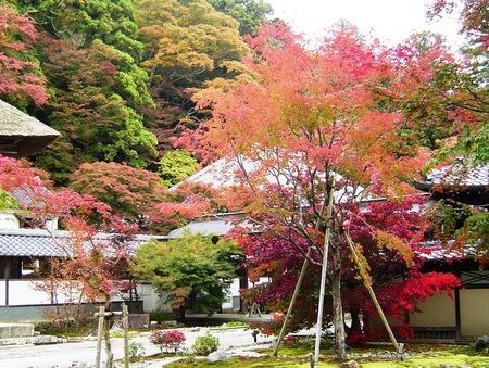 永源寺境内の黄葉.JPG
