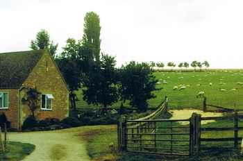羊の放牧.jpg